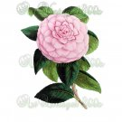 BEAUTIFUL FLOWER-004 Camellia vintage print