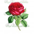 BEAUTIFUL FLOWER-002 Rose vintage print