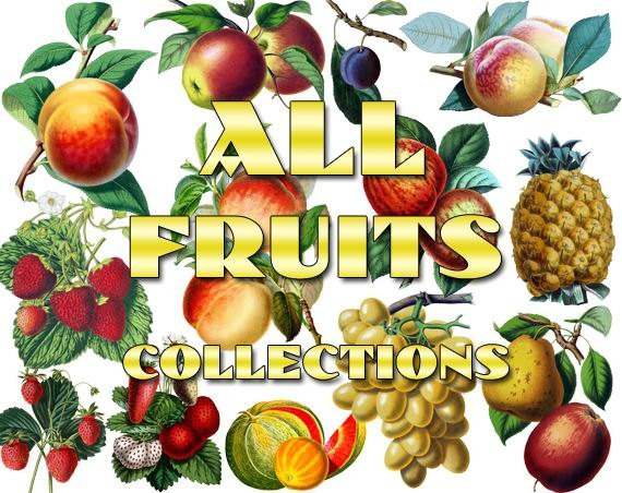 FRUITS ,  VEGETABLES Collections 1-20 with 1800 vintage print