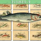 FISHES-9 157 vintage print