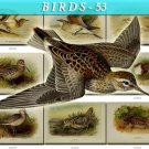 BIRDS-53 59 vintage print