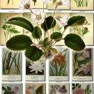FLOWERS-51 251 vintage print