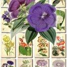 FLOWERS-77 262 vintage print