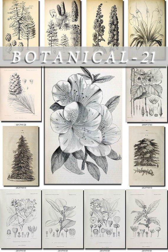BOTANICAL-21-bw 257 black-, -white vintage print