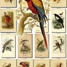 BIRDS-29 214 vintage print