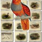 BIRDS-41 202 vintage print