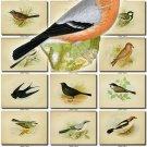 BIRDS-45 206 vintage print