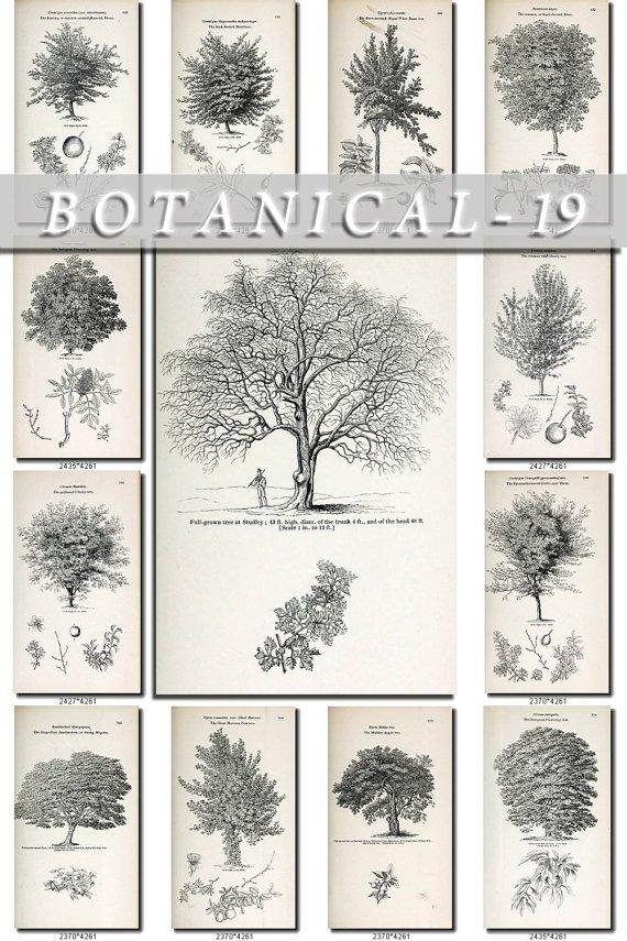 BOTANICAL-19-bw 307 black-, -white vintage print