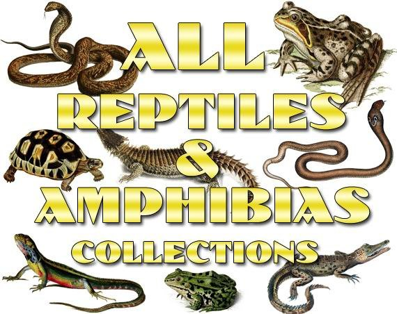 REPTILES ,  AMPHIBIAS Collections 1-20 with 4900 vintage print