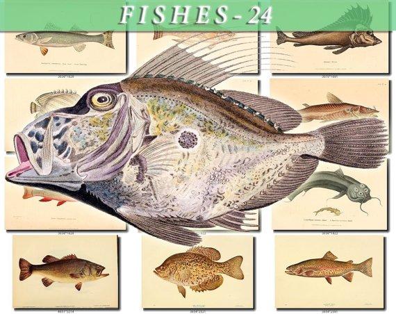 FISHES-24 69 vintage print
