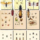 INSECTS-23 99 vintage print