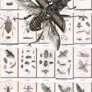 INSECTS-31-bw 163 black-, -white vintage print