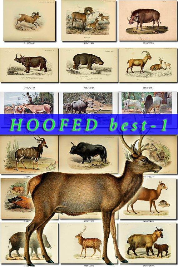 HOOFED BEST-1 UNGULATES Img. 95 most beautiful Artiodactyl Perissodactyl