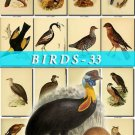 BIRDS-33 233 vintage print