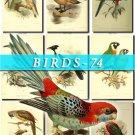 BIRDS-74 66 vintage print