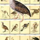 BIRDS-110 180 vintage print