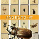 INSECTS-47 200 vintage print