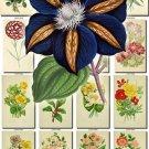 FLOWERS-21-b2 206 vintage print