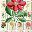 FLOWERS-55 118 vintage print