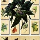 FLORA ,  FAUNA-13 203 vintage print