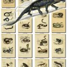 REPTILES & AMPHIBIAS-15 100 vintage print