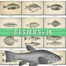 FISHES-16-bw 259 black-, -white vintage print