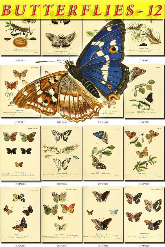 BUTTERFLIES-12 217 vintage print