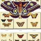 BUTTERFLIES-27 74 vintage print