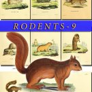RODENTS-9 50 vintage print
