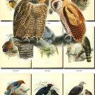 BIRDS-56 53 vintage print