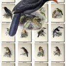 BIRDS-156 148 vintage print