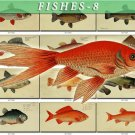 FISHES-8 256 vintage print