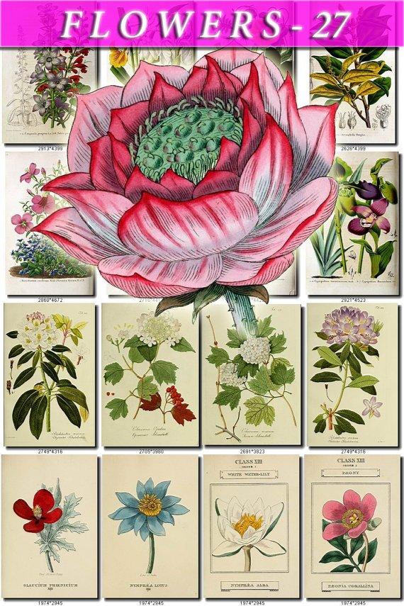 FLOWERS-27 76 vintage print