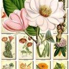 FLOWERS-81 242 vintage print