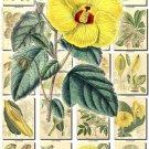 FLOWERS-86 240 vintage print