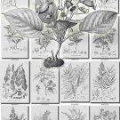 FLORA-4-bw 405 black-, -white vintage print
