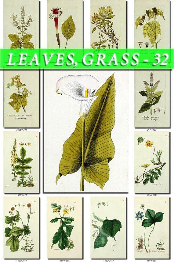 LEAVES GRASS-32 210 vintage print