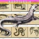 REPTILES & AMPHIBIAS-4-bw 246 black-, -white vintage print