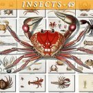INSECTS-49 177 vintage print