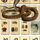 REPTILES & AMPHIBIAS-6 234 vintage print