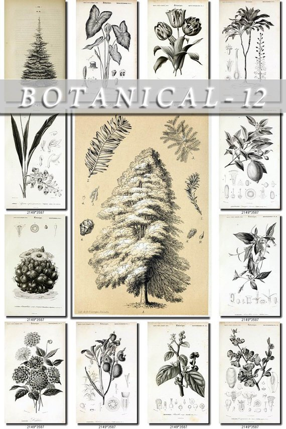 BOTANICAL-12-bw 426 black-, -white vintage print