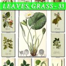 LEAVES GRASS-33 218 vintage print