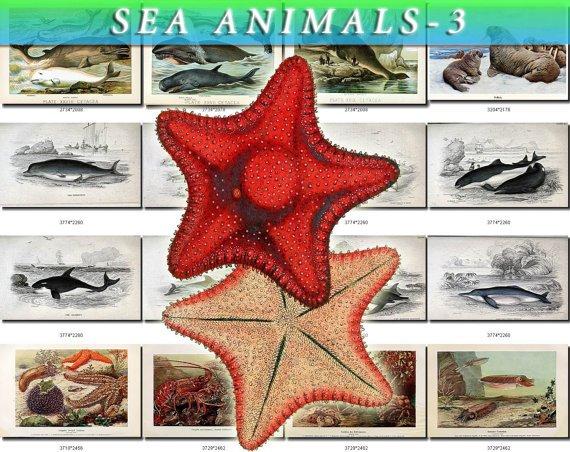 SEA ANIMALS-3 165 vintage print