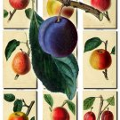 FRUITS VEGETABLES-5 160 vintage print