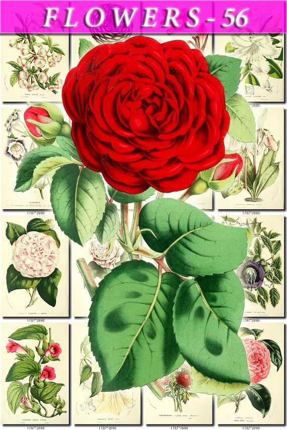 FLOWERS-56 80 vintage print