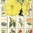 FLOWERS-78 261 vintage print