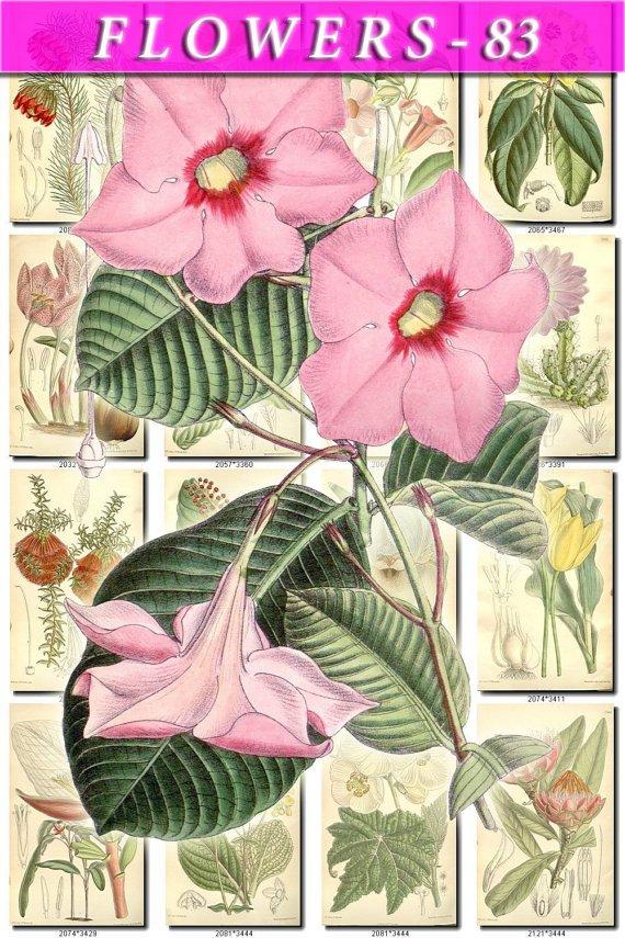 FLOWERS-83 238 vintage print