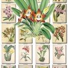 ORCHIDS-12 flowers 282 vintage print