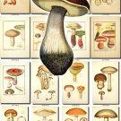 MUSHROOMS-8 380 vintage print