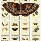 BUTTERFLIES-32 154 vintage print